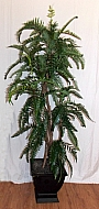 6FT CLIPPED FERN TREE